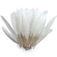 Plumes d'indien blanches 15cm - 10g