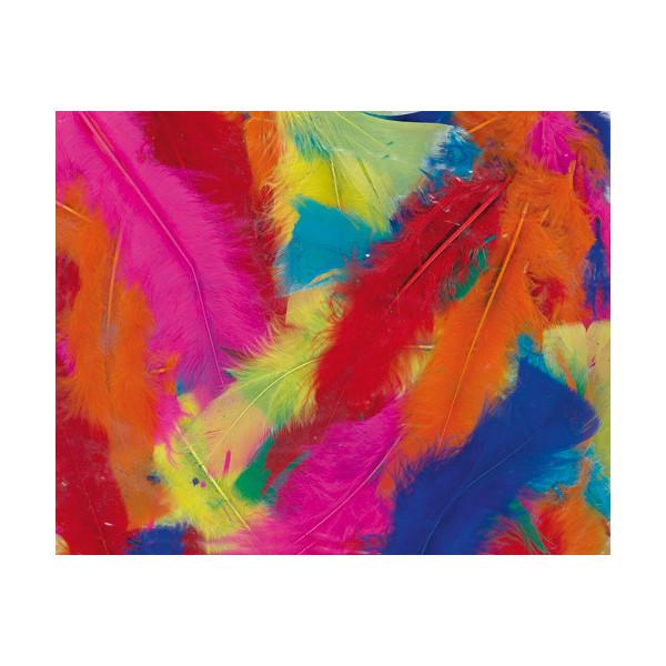 Plumes dinde multicolore - spécial collectivité